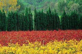 【上海】意大利Amarone顶级名庄Masi庄园品鉴会:风干葡萄的精髓