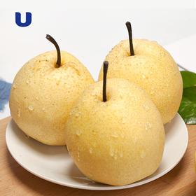 半岛优品 | 祁县贡梨 酥梨 饱满多汁  天然成熟 绝不催熟 吃了忘不了
