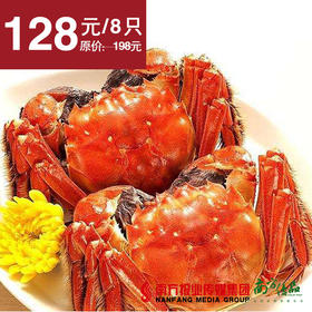 【肥美鲜香】阳澄湖大闸蟹  母蟹8只  约2.0两/只