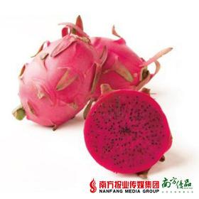【甜蜜多汁】海南北纬18度玫瑰香红肉火龙果  1个  约300g/个