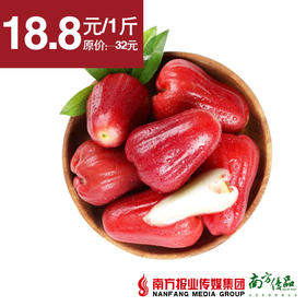 【脆爽清甜】越南黑金刚莲雾  单果120-160g左右  约3-4个/斤