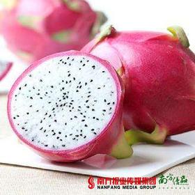 【清甜多汁】越南白肉火龙果  小果 2个 单果400-450g左右