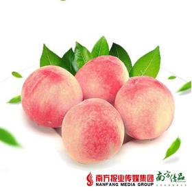 【皮薄肉脆】山东雪桃礼盒装 10个/盒 约6斤