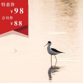 【10月27日】与您相约南艳湖 ,与候鸟来一场美丽的邂逅。   【真好玩系列活动】