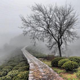 11.3徒步郎当古道,穿越龙井村茶田,徜徉在杭州的小九寨:九溪十八涧(1天活动)