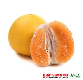 【入口鲜爽】福建平和黄金柚 1个 约2.5斤/个