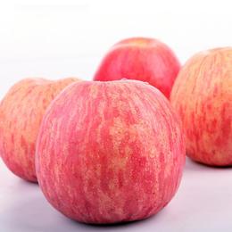 精选 | 陕西洛川红富士苹果 脆甜可口 肉厚多汁 现摘现发 新鲜直达