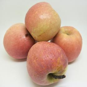 山西临猗苹果 脆甜多汁  5斤/8.5斤装全国包邮