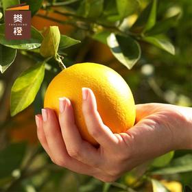 樊橙-正宗赣南脐橙10斤精选 精选10斤(约18-23个果)