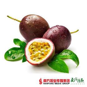 【酸甜多汁】云浮百香果 树上熟果  新鲜采摘