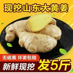 山东大黄姜散装老姜新鲜农家特产土姜调味鲜姜生姜2500g
