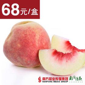 【香甜脆爽】青岛金秋雪桃  14个/盒 约6斤±3两