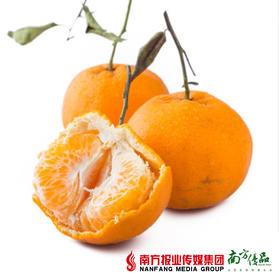 【酸甜易剥】湖南冰糖蜜橘  5斤±2两  单果110-130g左右