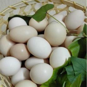 「昌江」山鸡蛋30枚-昌江王下黎祖生态旅游农业开发服务专业合作社的山鸡蛋