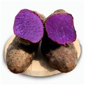 「临高」大薯1箱-贫困户符庆新的大薯