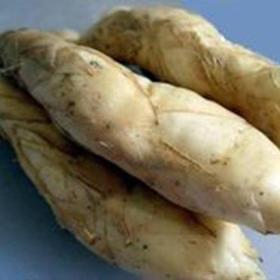 「海口」永兴岩味南椰薯冬粉薯-贫困户黄有佳的冬粉薯
