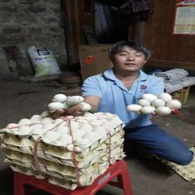 「定安」鸭蛋-贫困户吴祖积的鸭蛋-不支持线上交易