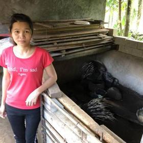 「定安」农家豪猪-贫困户莫锦文的豪猪-不支持线上交易