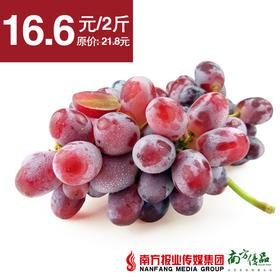 【微酸微酸】新疆无籽红提  2斤±2两