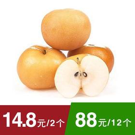 【脆甜多汁】山东秋月梨 单个250g左右