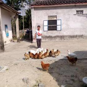 「定安」杂粮散养 农家鸡-贫困户李祥彪的鸡-不支持线上交易