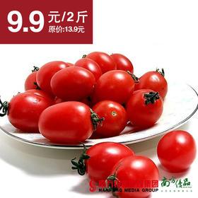 【清甜爽口】山东 红圣女果  大果  2斤±1两