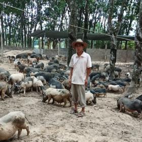 「乐东」五脚猪/斤-乐东塔丰田园生态种养殖农民专业合作社-不支持线上交易