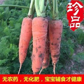 【农家老品种胡萝卜】农家老品种胡萝卜5斤装/无农药、无化肥