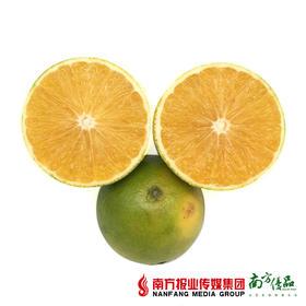 【软嫩多汁】盈香园3000青橙 果径约70mm  30个左右 10斤/箱