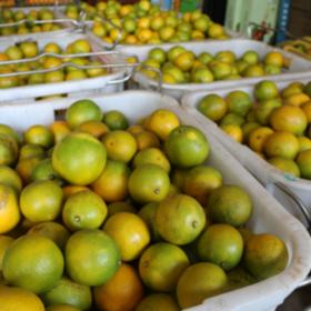 「澄迈」福橙10斤装-善缘果业公司的扶贫产品