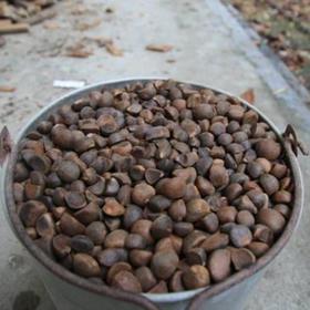 「海垦」山茶油-海垦母瑞山农场公司扶贫山茶油