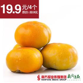 【脆甜】陕西 花田喜柿 脆柿 单果170g左右   4个