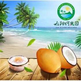 「海垦」金椰子1箱-东新农场公司的扶贫金椰子  节后发货