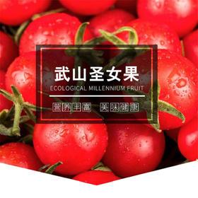 「陵水」武山圣女果-陵水电商扶贫中心的扶贫圣女果