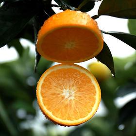 果然U品│被阳光宠溺过的高山冰糖橙  带箱约10斤 果实饱满 甜蜜多汁 不打蜡不催熟