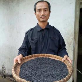 「定安」黑豆-贫困户莫启钻的鲁古井黑豆