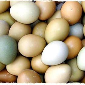 一枚野鸡蛋抵上四枚草鸡蛋的营养【大别山野鸡蛋】30枚 99元散养野鸡蛋 单个26-30g左右 口感鲜嫩细腻 健脑益智 改善记忆力 防癌