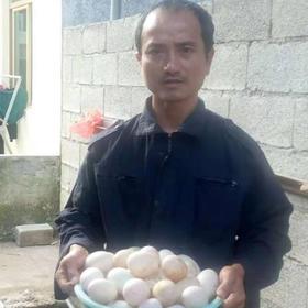 「定安」双黄鸭蛋-贫困户莫启钻的鸭蛋