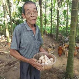 「琼海」鸡蛋20枚/盒-琼海忠锐农业公司的扶贫产品