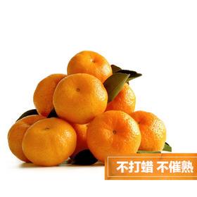 南丰精品蜜桔 原生态水果 现摘现发  8斤装