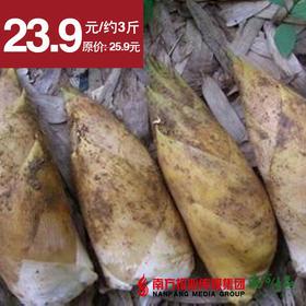 【鲜 脆 爽】江西井冈山新鲜冬笋  约3斤/份