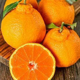 四川丑橘桔子新鲜薄皮当季水果丑八怪橘子10斤