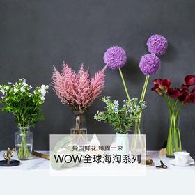 WOW全球海淘系列 | 精选全球好花,低成本享用海外优质鲜花