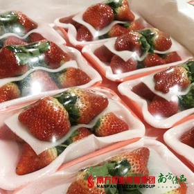 【香滑细腻】安徽奶油草莓  约180g/盒  1盒