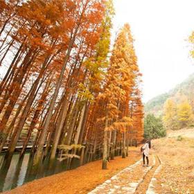 【秋色】11.30相约稽东小九寨,打卡网红水杉林,漫步雪窦岭古道(1天)