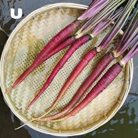 大理野生紫云萝 野生香嫩甜脆 生熟两吃 富含花青素  香味独特 可以作为水果生吃