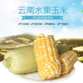 【现摘现发】云南高原水果玉米新鲜应季甜玉米棒生吃蔬菜包邮