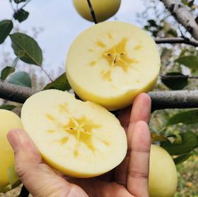 【黄金冰糖心苹果】特级烟台金苹果  细腻爽滑甜 5斤9颗装包邮