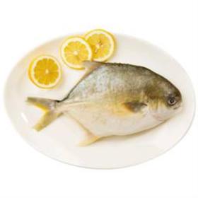 「临高」金鲳鱼-临高海丰养殖发展公司的扶贫产品(仅限临高县内快递配送)