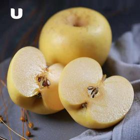 烟台黄金奶油富士苹果 自然成熟后香甜多汁 皮薄如纸  口感脆甜 4.8-5斤装